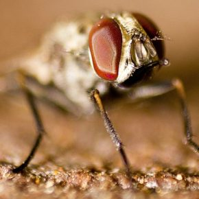 """""""When a tsetse fly,"""" a poem by Mari Pack."""